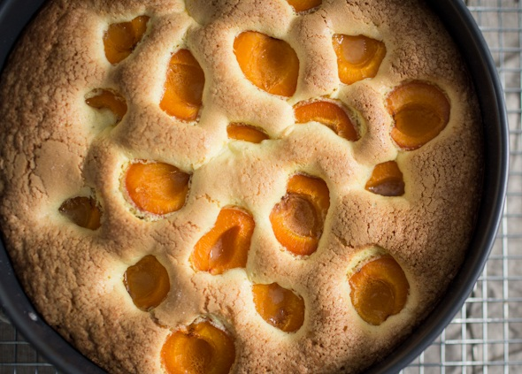 عکس کیک زردآلو
