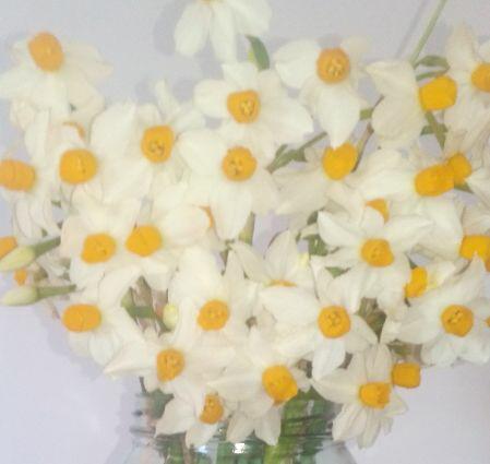 daffodil1393