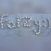 farzy:)