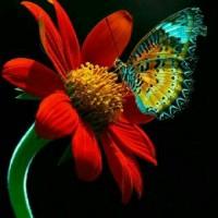 گلبوته( فاطمه)