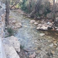 FatemehHasanpour