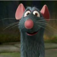 موش سراشپز1